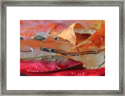 Framed Print featuring the photograph Water Drops On Autumn Leaves by Angela Murdock