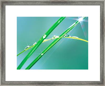 Water Drops On Leaves, Lit Framed Print