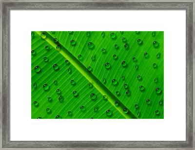 Water Drops On Palm Leaf Framed Print by Georgeta Blanaru