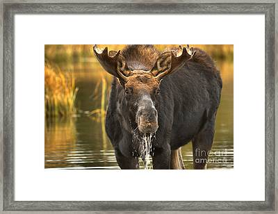 Water Face Framed Print by Adam Jewell