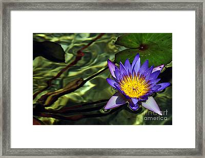 Water Floral Framed Print by Clayton Bruster