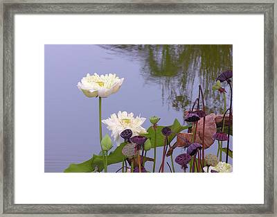 Water Flowers Framed Print by Jim Justinick