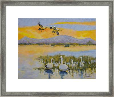 Water Fowl, Sutter Buttes Framed Print