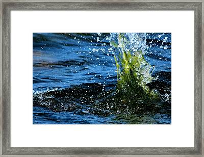 Water Games Framed Print by Heike Hultsch
