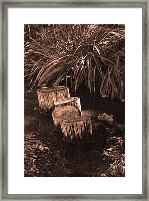 Water Garden Framed Print by Audrey Venute