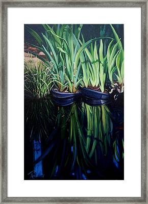 Water Garden Serie-h Framed Print by Patricia Reed