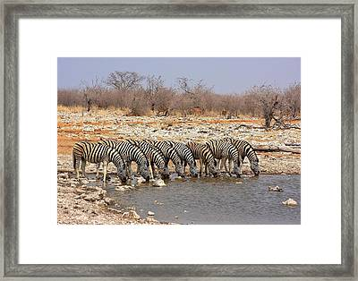 Water Hole Social 2 Framed Print by Stacie Gary
