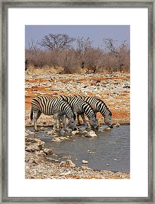 Water Hole Social Framed Print by Stacie Gary