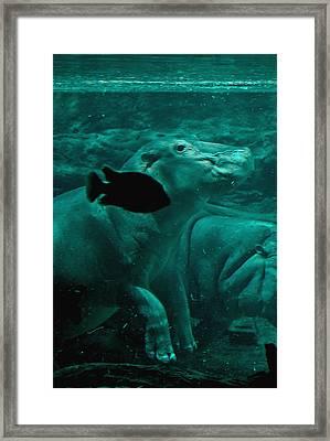 Water Horse Ballet Framed Print