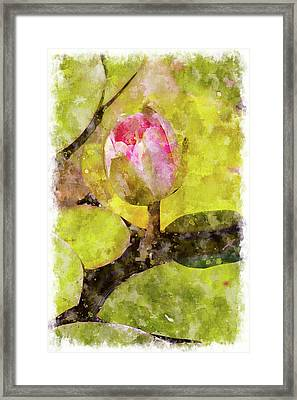 Water Hyacinth Bud Wc Framed Print by Peter J Sucy