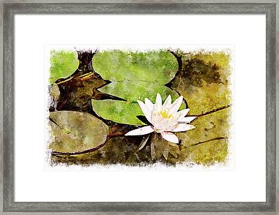 Water Hyacinth Two Wc Framed Print by Peter J Sucy