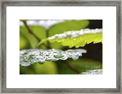 Water Levels Framed Print