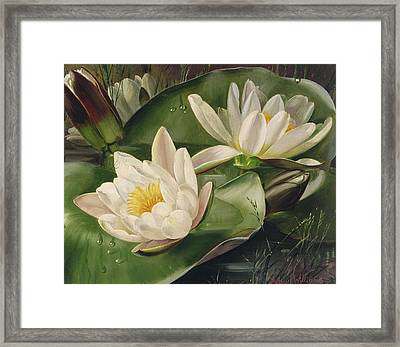 Water Lilies Framed Print by Albert Williams