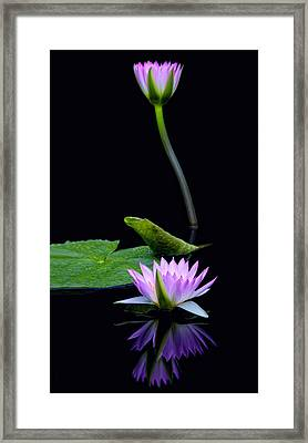 Water Lilies And Reflections Framed Print by Margaret Barry