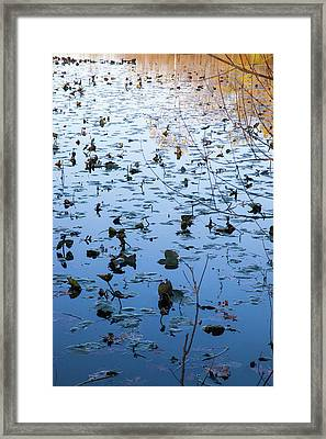 Water Lilies Autumn Song Framed Print