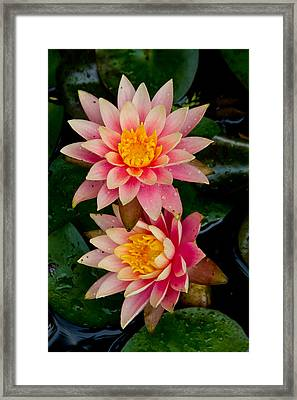 Framed Print featuring the photograph Water Lilies by Brent L Ander