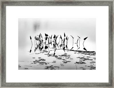 Water Lilies Framed Print by Catherine Alfidi