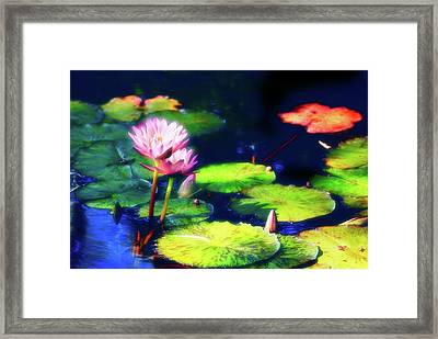 Water Lilies Framed Print by Harry Spitz