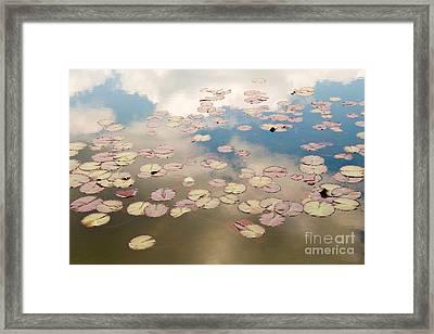 Water Lilies In Schoenbrunn Vienna Austria Framed Print