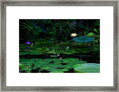 Water Lilies In The Pond Framed Print