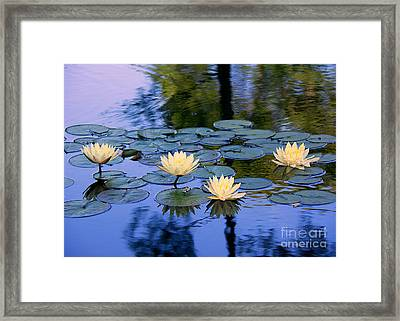 Water Lilies Framed Print by Lisa L Silva