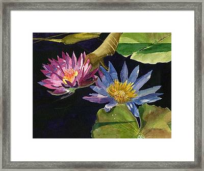 Water Lilies Framed Print by Lynne Reichhart