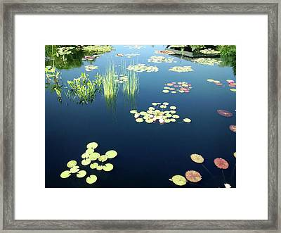Framed Print featuring the photograph Water Lilies by Marilyn Hunt