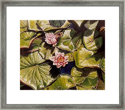 Water Lilies On The Ringdijk Framed Print by Constance Drescher