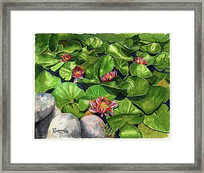 Water Lilies Framed Print by Timithy L Gordon