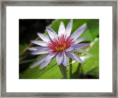 Water Lillies At Waimea I Framed Print by Elizabeth Hoskinson