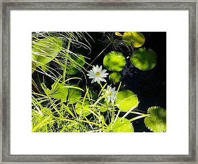 Water Lillies Framed Print by John Parry