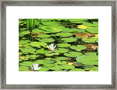 Water Lillies Framed Print