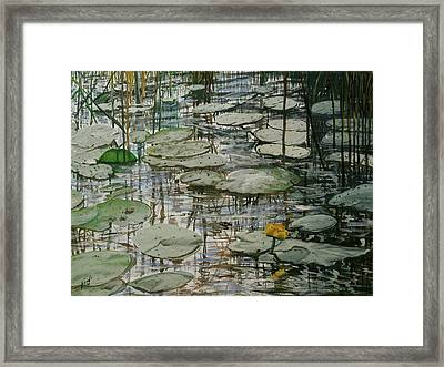 Water Lilly Framed Print by Maria Woithofer