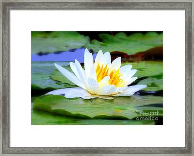 Water Lily - Digital Painting Framed Print by Carol Groenen