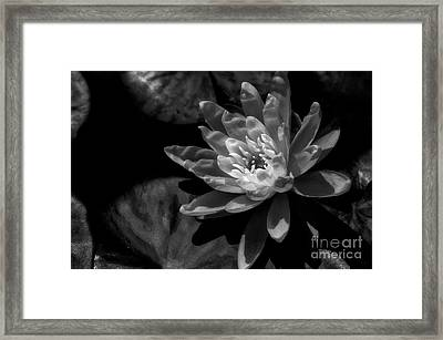 Water Lily 1 Framed Print by Venetta Archer