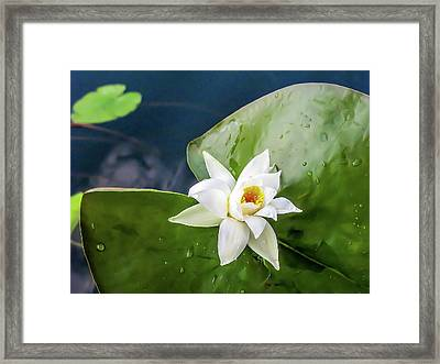 Water Lily After Rain - One White Waterlily With Drops After Rain Framed Print