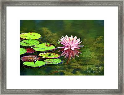 Water Lily And Frog Framed Print by Savannah Gibbs