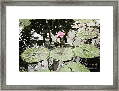 Water Lily Canvas Framed Print by Carol Groenen