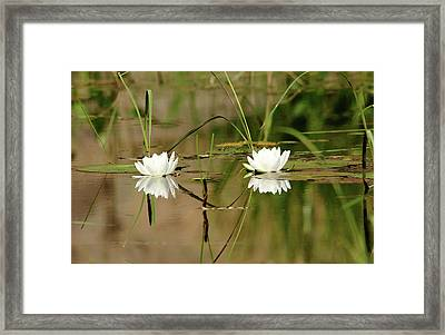 Water Lily Duet Framed Print