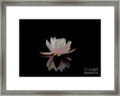 Water Lily Framed Print by Elizabeth McPhee