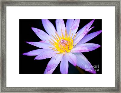 Water Lily Framed Print by Eyzen M Kim