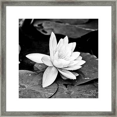 Water Lily Flower Framed Print by Gordon Wood