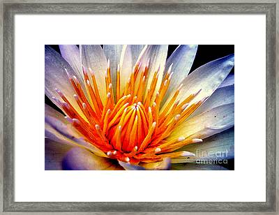 Water Lily Flower Framed Print
