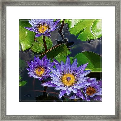 Water Lily Framed Print by George Moore