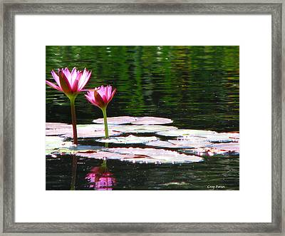 Water Lily Framed Print by Greg Patzer