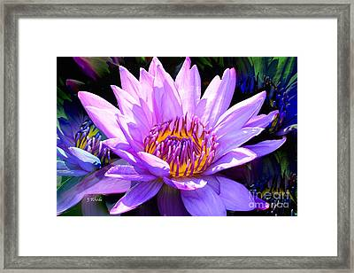 Water Lily In Purple Framed Print by Jeannie Rhode