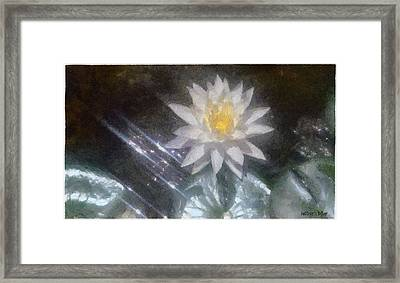 Water Lily In Sunlight Framed Print by Jeffrey Kolker
