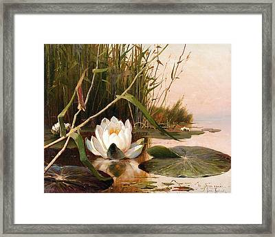 Water Lily Framed Print by MotionAge Designs