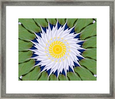 Framed Print featuring the photograph Water Lily Kaleidoscope by Bill Barber