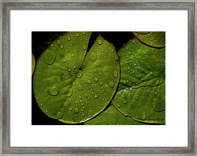 Water Lily Leaf Framed Print by Chaza Abou El Khair